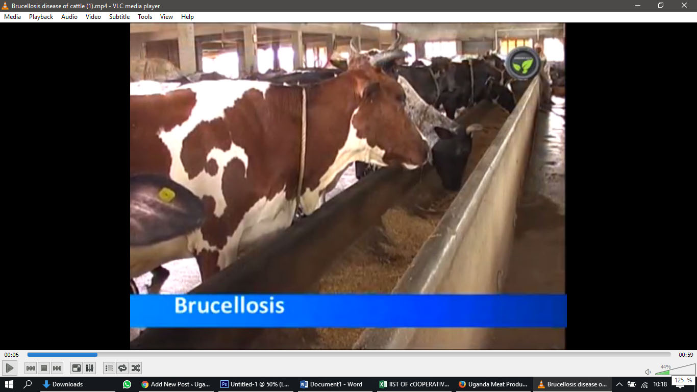 Brucellosis in Animals