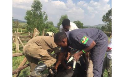 Ensuring a healthy herd through animal disease control