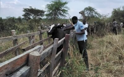 Monitoring the health of your herd